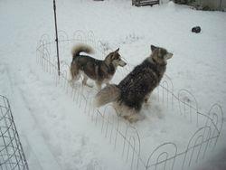 Mieshka & Bear FKA Silver