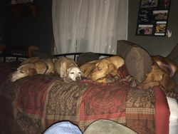Abby, Calleigh, Ruby, and EV