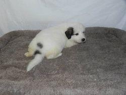eva - f3 - 03 - audrey's pup