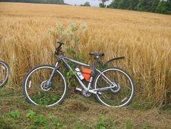 Weary bike!