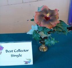 BEST COLLECTOR SINGLE - EVENING GLOW - Carolyn Cormier-Stoute, Scott, LA.