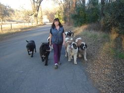 On a pack walk