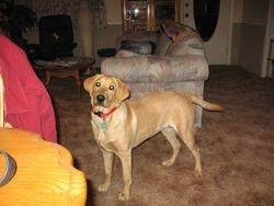 Izzie at 6 months