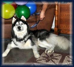 Zorro Birthday 8-12-09