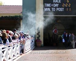 Paddock Smoke