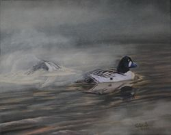 "Sturgeon River Goldeneye (8 by 10"" oil on canvas) Collection of Artist"