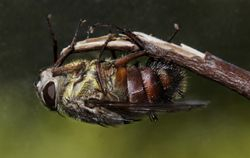 Fly detail 2