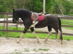 MJM Queen of Hearts '07 NASDHA filly