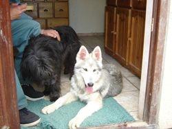 Zeus & Shaman June 2008