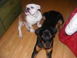 Maximus and Irwin