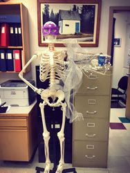New student - Skeleton