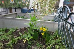 Unsere selbstgepflanzten Blümchen
