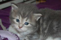 Anastasia 4 uker, og er 465 gr.
