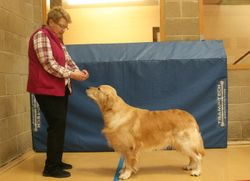 Winner of Limit Dog