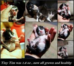 Meet Tiny Tim