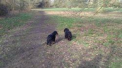 Hardwick Heath with Maddie