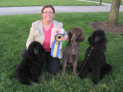 Phoenix, Penny and Pepper with ribbons at PCA National Specialty.  4/27/10.