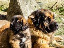 Lea et Orso (Olbogoss du Val d'Avesnes)