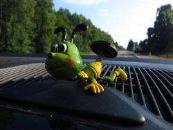 Dashboard companion