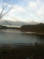 Snow geese 10 miles from my house on 12-3-12