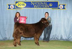 Reserve Champion Intermediate Heifer Calf