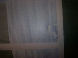 cow behind sheer curtain