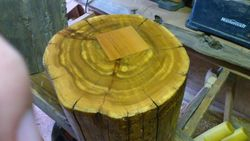 This is  Cedar stump