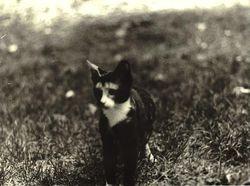 Daisy as a kitten