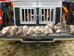 ANOTHER HUNT IN SOUTH MONTGOMERY