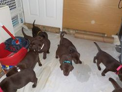 Pups check out cleaning bucket