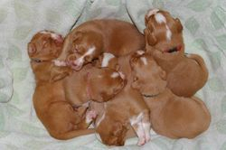 Basket of 17 day old pups