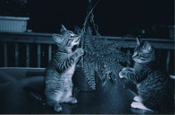 Our cats, 2005.