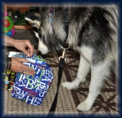 Zorro checking out Presents 2