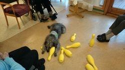 Bowling med terapihund 3