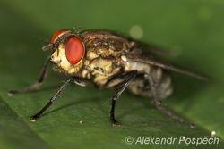 Fly, Wanang