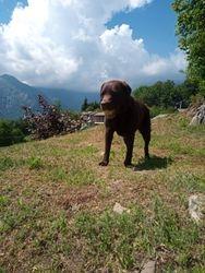 Edal in vacanza con Zazie da Segrate (Italia)_Edal on holiday with Zazie from Segrate (Italy)