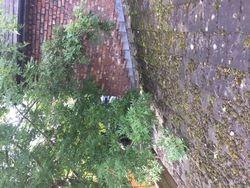 Tree Prune & Roof Clean