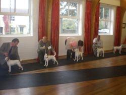 dog line up oct 07