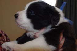 Black and white boy-3 - still available!