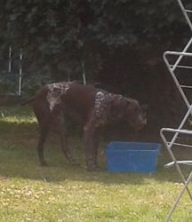 Enjoying a cooling drink from the big water bucket!
