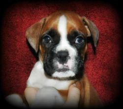 Penny 6 weeks