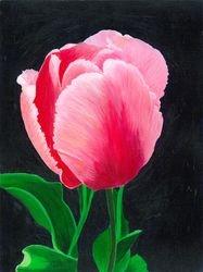 My Tulip 2