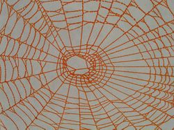 spider web closeup