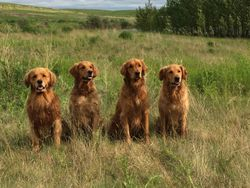 zaniri dogs at the hunt test