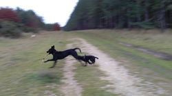 Chasing Jetta and her stick