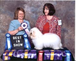 BISS GRAND BISS GRAND CHAMPION Showboat Greek God Zuce (Coton de tulear)