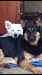 Kaiser & Bestie