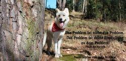 Aprilhund - Yoshi