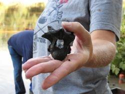 A crocodile vertebra found on our Cape Fear River trip.