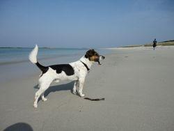 Ferienhaus Bretagne mit Hund 9